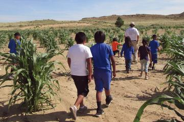 Hopi children and adults walking through corn plants